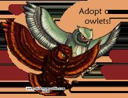 OwlsFeb2012.png